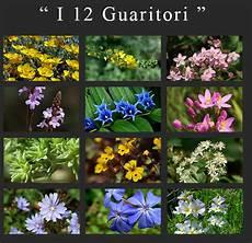 38 fiori di bach edward bach la nascita della floriterapia caffebook