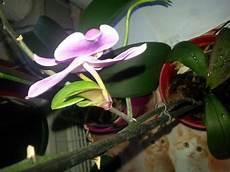 orchideen ableger pflanzen pflege blumen