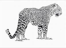 Cheetah #2 (Animals) ? Printable coloring pages