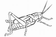 ausmalbilder zum ausdrucken gratis malvorlagen insekten 3
