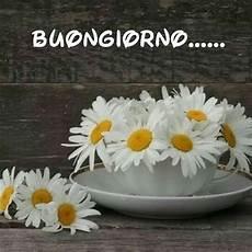 frasi con fiori immagini frasi buongiorno con fiori margherite immagini