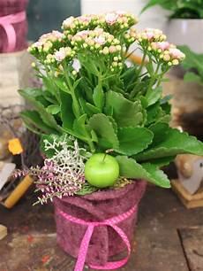 topfblumen als geschenk verpacken blumen im topf verschenken rosa hortensien onine
