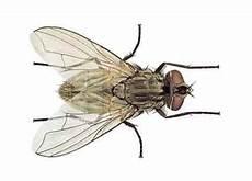 chasser les mouches comment chasser les mouches 4 233
