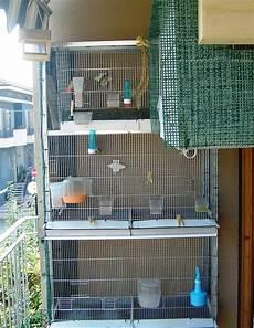 costruire gabbia per uccelli progetto voliera indice forum