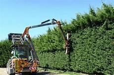 devis elagage arbre prix d un 233 lagage d arbre ou d arbustes