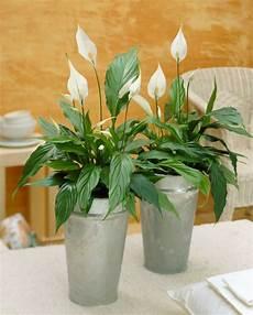 Plantes D 233 Polluantes Pour Un Air Plus Sain 224 La Maison