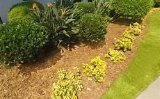 Garten Mit Rindenmulch Gestalten - rindenmulch beet anlegen home ideen