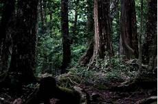 Kumpulan Gambar Koleksi Mobil Mewah Dan Termahal 8 Hutan