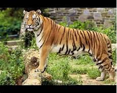 Hidupkan Semula Aktiviti Aktiviti Kehaiwanan Di Zoo Zoo