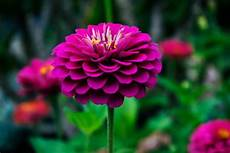1000 beautiful beautiful flowers photos 183 pexels 183 free stock photos