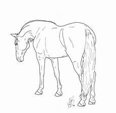 pferde ausmalbilder dressur malvorlagen