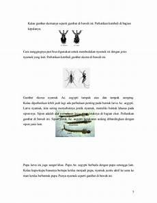Makalah Dhf Demam Berdarah Dengue