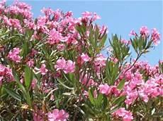 flor del estado barinas estado barinas fauna y flora