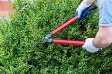 buchsbaum schneiden wann am besten wann den buchsbaum schneiden 187 der richtige zeitpunkt