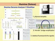 illumina solexa ppt metody molekul 225 rn 237 biologie v ekologii a systematice