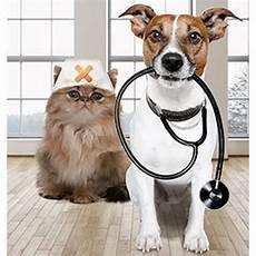 avis sur assurance chat april pour mutuelle animaux pour