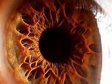 Gambar Mata Manusia Warna Mata Manusia Cerdas
