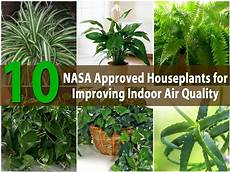 Pflanzen Zu Hause - top 10 nasa approved houseplants for improving indoor air