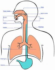 voile au poumon la respiration pour le chant audiofanzine