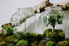 Terrarium Bocal Les Herbes Hautes Via Nat Et Nature