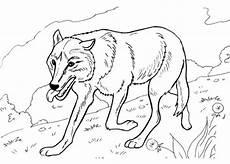 ausmalbilder wolf zum ausdrucken malvorlagentv
