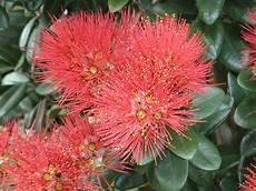 pflanze mit roten blüten rote bl 252 ten foto bild pflanzen pilze flechten