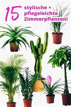 zimmerpflanzen groß pflegeleicht die 25 besten ideen zu gro 223 e zimmerpflanzen auf