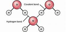 hydrogen bond diagram why depends on water biology for non majors i