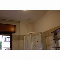 traitement humidité mur interieur peinture anti moisissure pour le traitement des murs