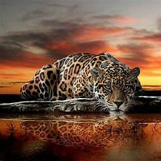 Jaguar Abstract Wallpaper