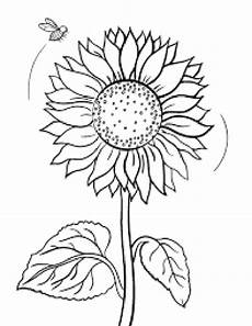 sunflower drawing template at getdrawings free