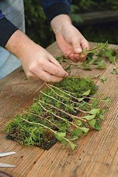 stecklingsvermehrung der rolle garten bepflanzen