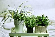 5 Plantes D Int 233 Rieur Pour D 233 Corer La Chambre 224 Coucher Et