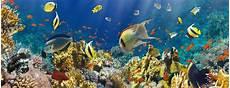 koralle und fische stockfoto bild unterwasser ozean