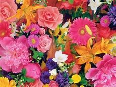 flower wallpaper hd new fresh flowers hd wallpapers for desktop 1 new
