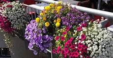 Balkonpflanzen Sonnig Pflegeleicht - beste balkonpflanzen 2015 bilder