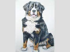 """Berner Sennenhund """"Spencer""""   Zeichnung, Hundeportrait"""