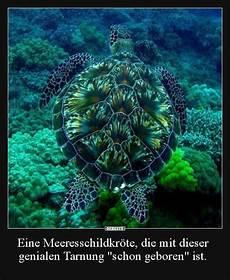 Malvorlagen Unterwasser Tiere Lustig Eine Meeresschildkr 246 Te Die Mit Dieser Genialen Tarnung