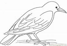 coloring pages hungry birds gt free printable