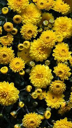 yellow flower wallpaper iphone yellow floral iphone wallpapers top free yellow floral