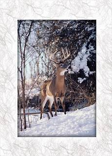 whitetail deer in snow christmas greeting cards by cardsdirect