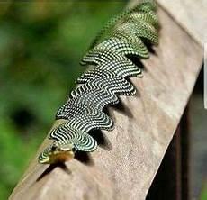 Diese Schlange Hat Verschiedene Farben Die Fast Wie Ein