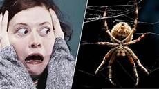 angst vor spinnen wie sie ihre angst vor spinnen in nur zwei minuten loswerden