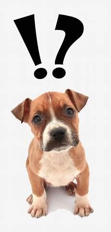 choisir le bon 233 ducateur canin dressage chien ou chiot
