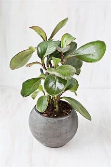 giftige zimmerpflanzen baby poisonous house plants photos