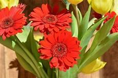 fiore flowers free images petal flora gerbera floristry