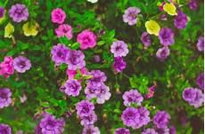 blumen klein pink and yellow petaled flower photo 183 free stock photo