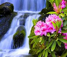 Beautiful Flower Wallpaper Zedge by 342 Best Zedge Images By Panda On Blossoms