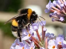 bienen niedrigere klassifizierungen wasp bees nest removal honeybee centre