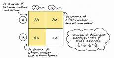 ten punnett square worksheet ideas for middle school